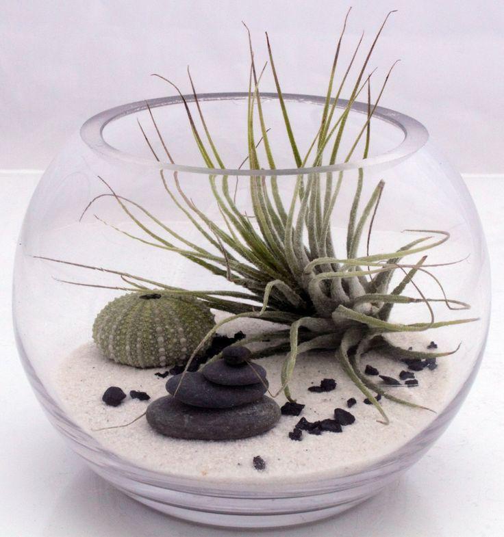 99 best mini zen garden images on pinterest for Fish bowl plants