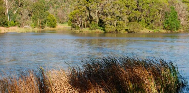 Birdsland Reserve - Dandenong Ranges, between Belgrave and Lysterfield Lake Park, a 75ha bushland reserve that is home to native birds and animals. You may even spot a Platypus!
