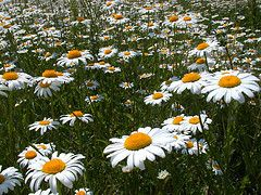 Anois teacht an Earraigh - Spring is now coming