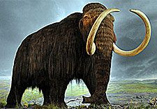 The Case for De-Extinction: Why We Should Bring Back the Woolly Mammoth