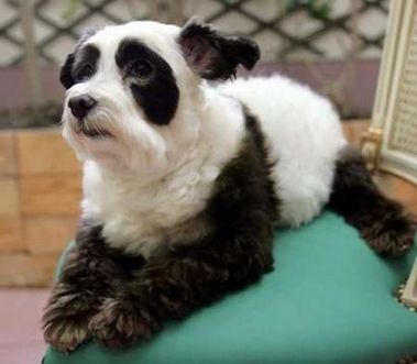 Dog + Panda
