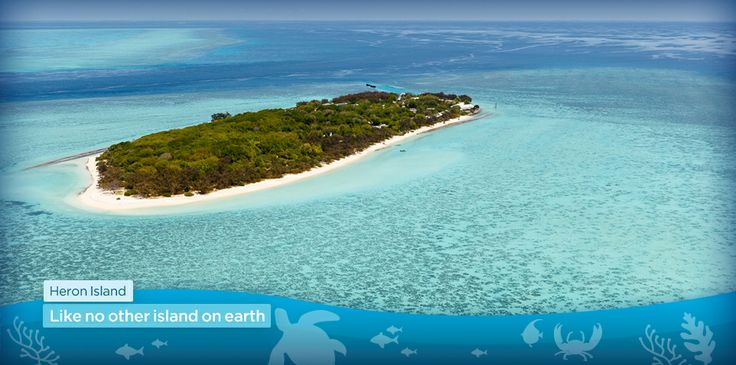 Heron Island on the Great Barrier reef, off Gladstone in Queensland. Home of green turtle nesting grounds. Within Australia:  1-300-863-248     Outside Australia:  +61 3 9426 7550  Opening hours: Monday to Friday 8:30am - 6:30pm Saturday 8:30am - 5:00pm Sunday 9:00am - 4:30pm  All opening hours are Australian Eastern Daylight Savings time.