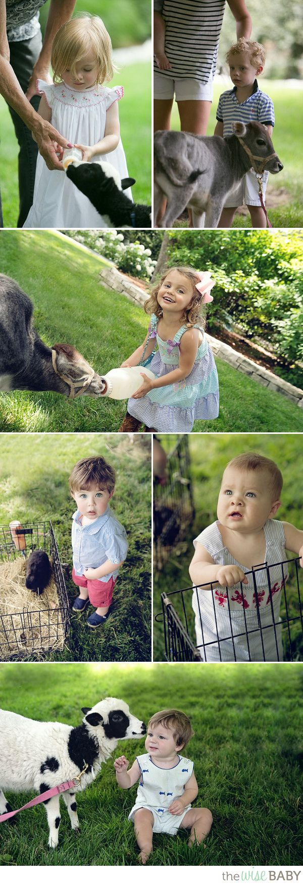Best 25 Petting zoo ideas on Pinterest Petting zoo party Farm