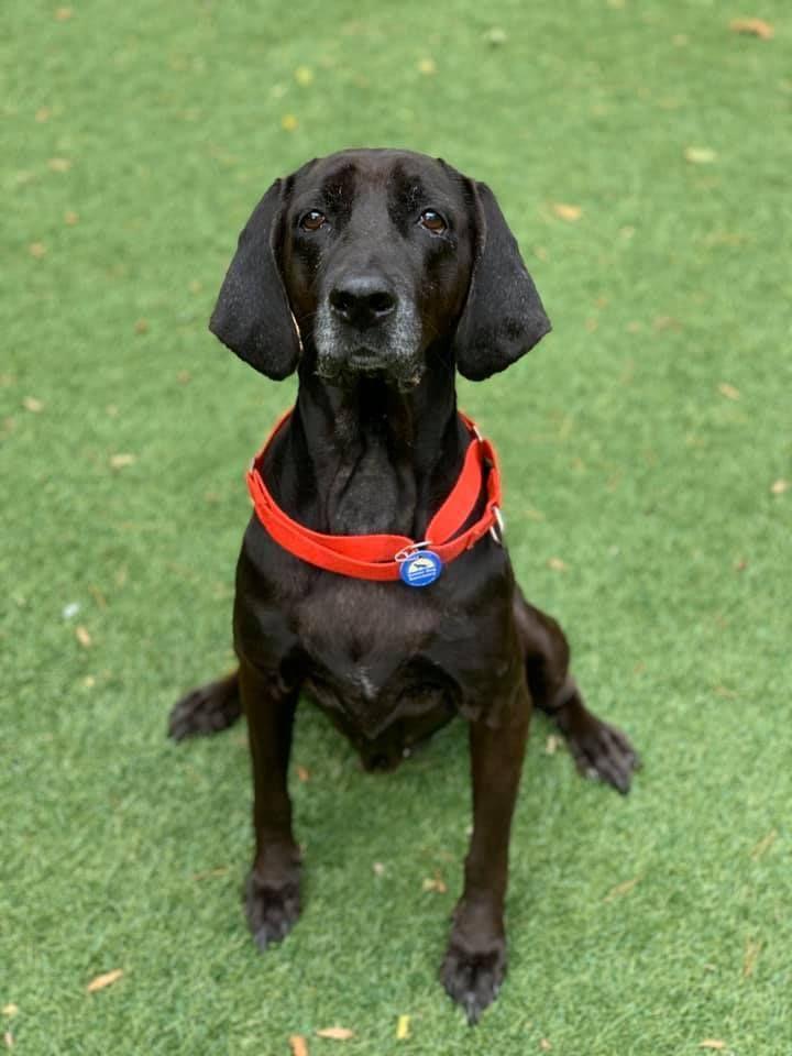 Adopt Lucy On Petfinder Shelter Dogs Adoption Dog Adoption Shelter Dog Quotes