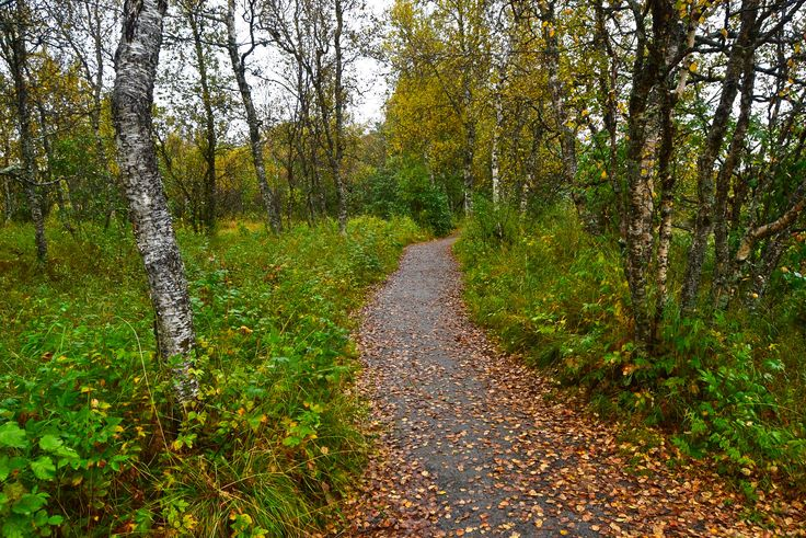 Hiking along a forest path on a gray autumn day