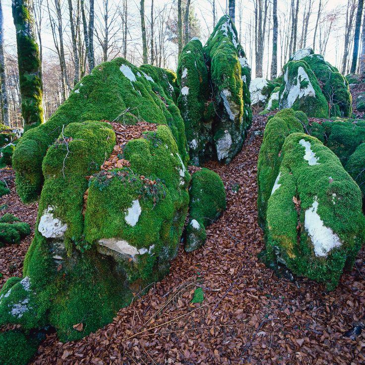 La #Natura dell'Alpago http://www.alpagocansiglio.eu/it/sport-e-natura/natura-in-alpago