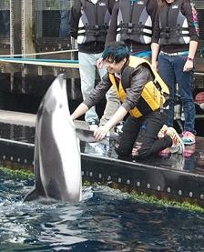 Sooo cute! The smile on Josh's face! He just looks so happy and like he loves dancing with that dolphin! lol.