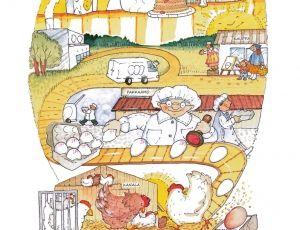 Ruuan reitti kananmuna, kuvitus Heli Pukki, Ruokatieto