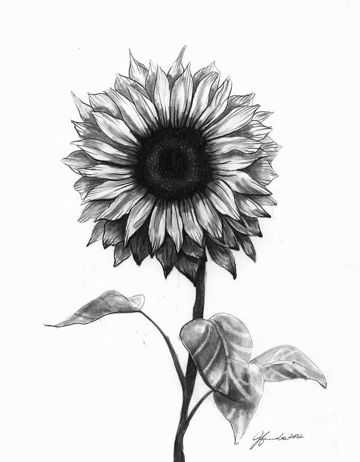 Drawings Of Sunflowers In Pencil Sunflower Pencil Sketc...