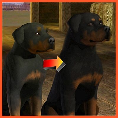 Rottweiler Improved By Littlev The Exchange Community