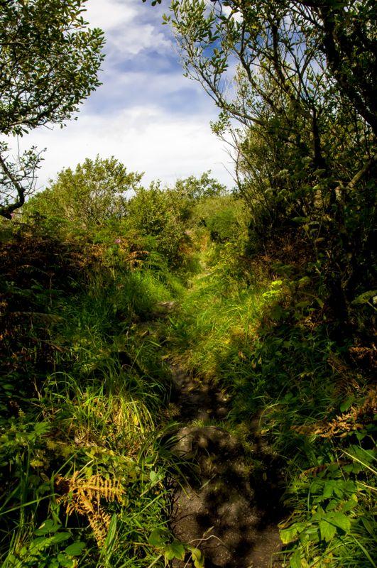 Bidezidorra argi-ilunean (A path along the shadows)