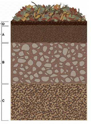 9 best images about soil profile on pinterest the bin for Top layer of soil
