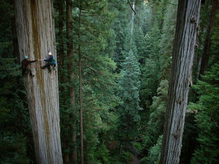 Forests of giant sequoias.