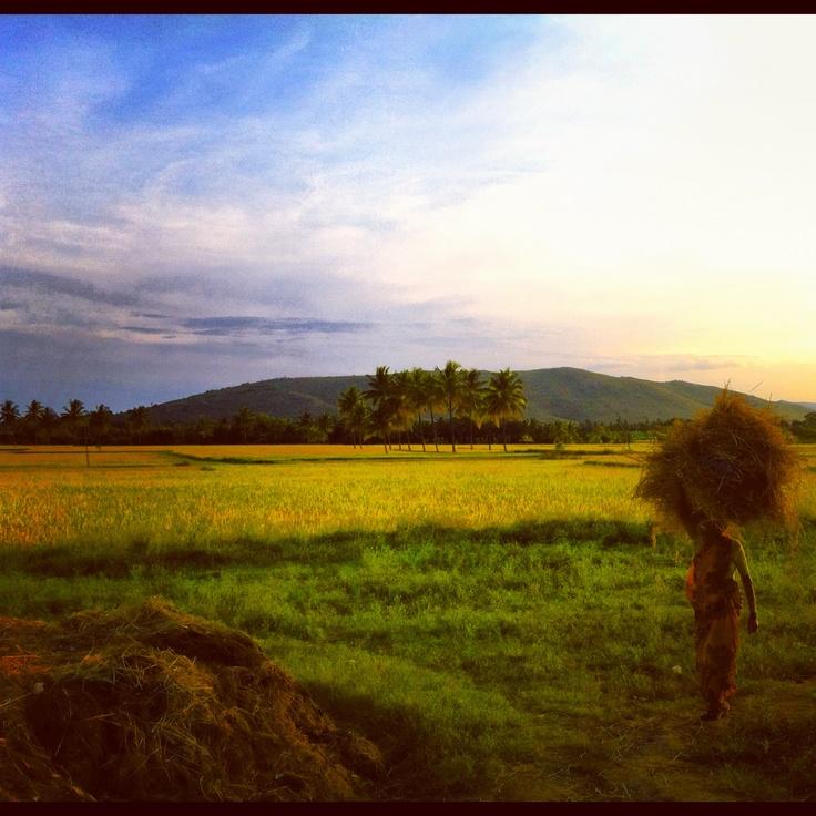 MicroGraam borrowers in northern Karnataka #instagram #india #travel #microfinance #microcredit #sunset