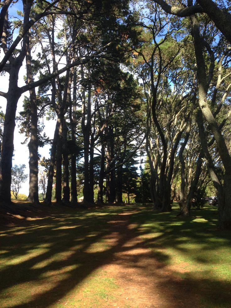 | Cornwall Park, Auckland, NZ