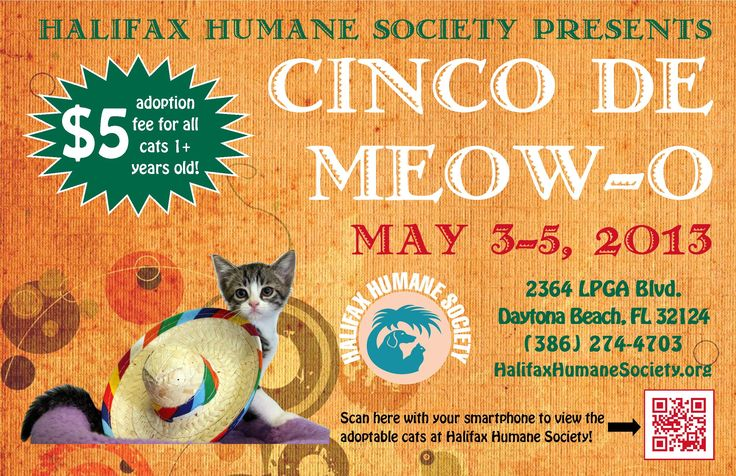 Come to Halifax Humane Society's Cinco de Meow-O promotion from May 3-5 to find your new best friend!