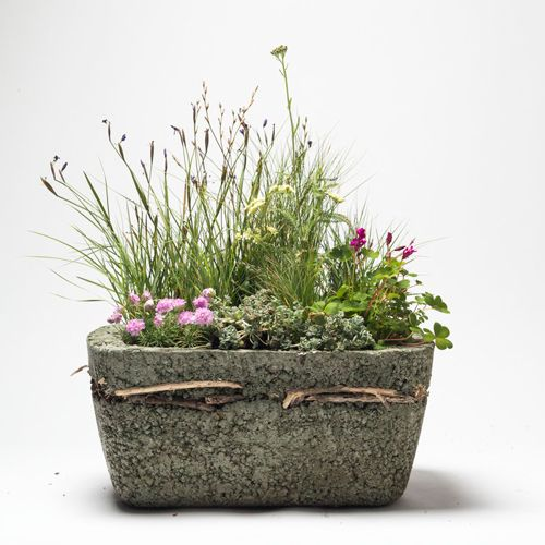 Perfect seed combinations to plant gorgeous container meadows - Sunset