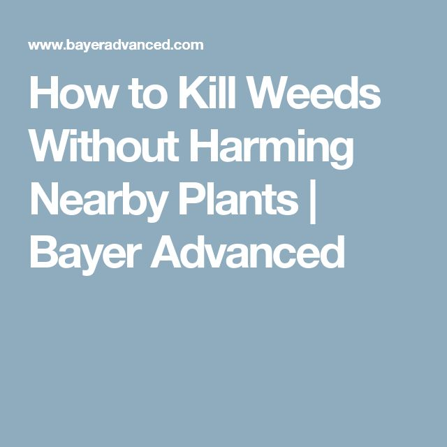 How to Kill Weeds Without Harming Nearby Plants | Bayer Advanced