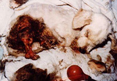 ANIMALISMO O TRAFFICI DI ANIMALI?ANIMALISMO O MAFIA?: GERMANIA: I RIFUGI DELLE…