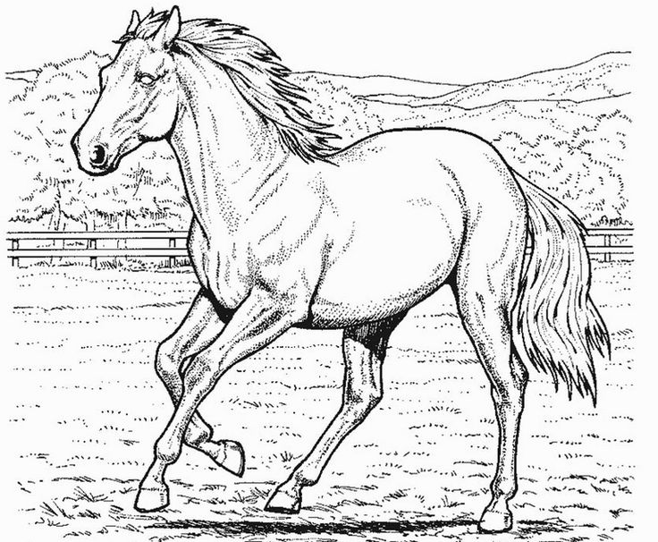 Print coloring page and book, Horse Coloring Page for kids of all ages. Updated on Friday, October 18th, 2013.