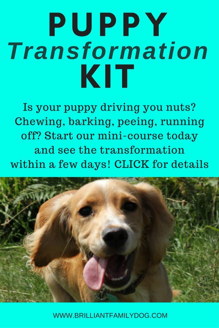 Transform Your Puppy In Our Quick And Easy Mini Course All Kind