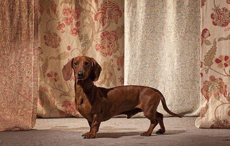 #ткани должны гармонировать с вашим настроением @tkanigood #galleria_arben #шторы #fabric #портьеры #собака #настроение #декорокна #dog