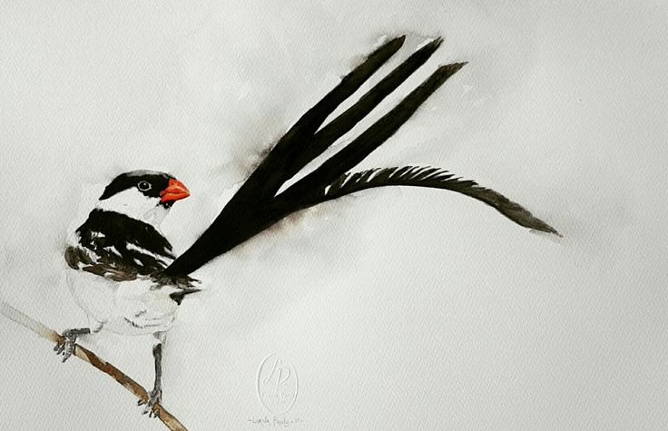 Pin-tailed Whydah  Artist Lorna Pauls  Watercolors on 300g half sheet Bockingford paper  Done March 2017