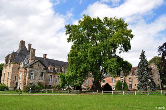Le platane d'orient du château le Kinnor, Fervaques (Calvados)