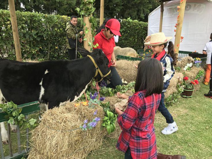 Fiestas infantiles de granja
