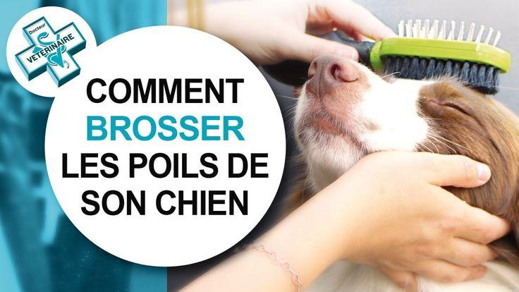 Tutoriel vétérinaire : comment bien brosser son chien. #poils #brossage #furminator #brosse #pelage #toilettage #conseil #vétérinaire