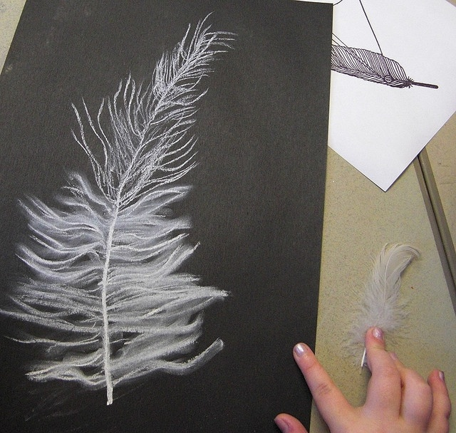 These drawings were done by children aged 10. They used white chalk and charcoal on black paper and used a real feather for observation enlarging the drawings to fill the paper. They were using the smudging qualities of the chalk to recreate the texture of the feathers.