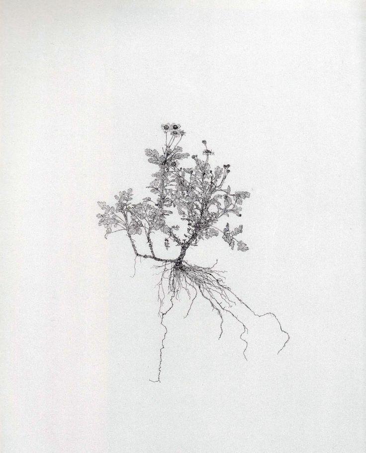 Michael Landy  Drawing of weeds post 'breakdown'