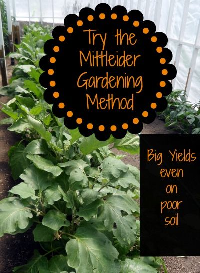 8 Reasons to try the Mittleider Gardening Method | PreparednessMama