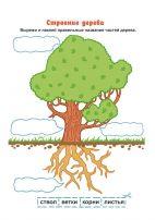 Строение дерева. Цветная иллюстрация