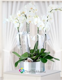 meleklerin en güzeli beyaz orkide