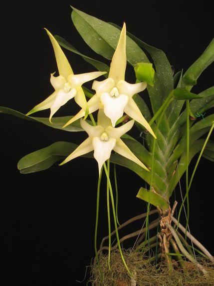 SP sediará exposição de orquídeas                                                                                                                                                                                 Mais