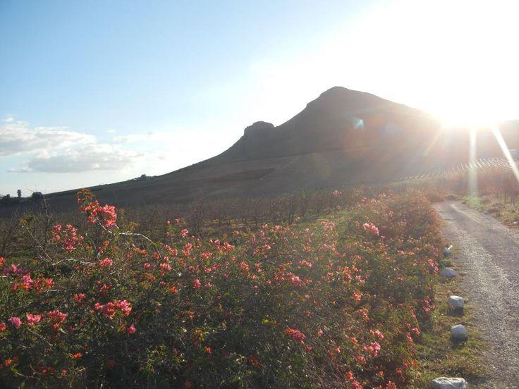 """@WineWldlfeWandr: Head to Robertson for an amazing wine route! Gateway to Klein Karoo #TravelChatSA "" stunning"
