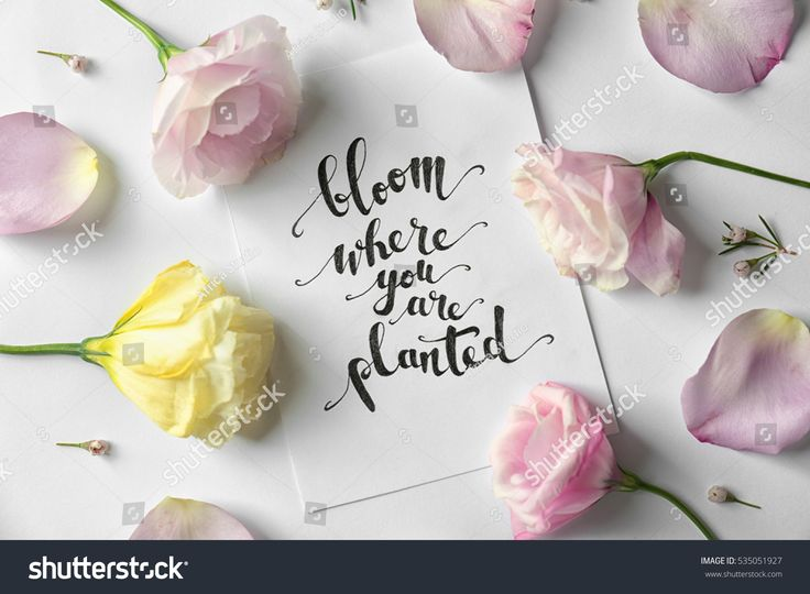 """Quote """"Bloom where you are planted"""" written on paper with petals and flowers. Top view"""