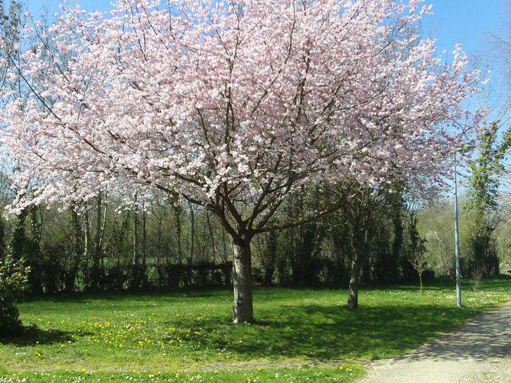 arboretum d'Aiffres. Le jardin aux 105 parfums