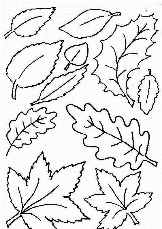 Fine Arts - OiLS - Leaf coloring pages