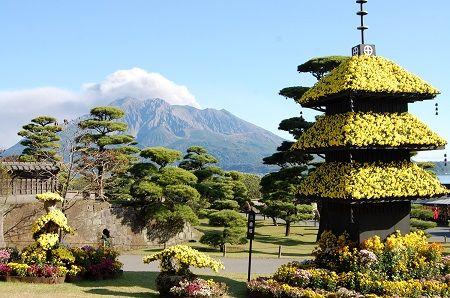 Sengan-en Chrysanthemum Festival 2016 – Gorgeous Chrysanthemums, Events and Lunch –   KAGOSHIMA Visitors' GUIDE   鹿児島ビジターズガイド