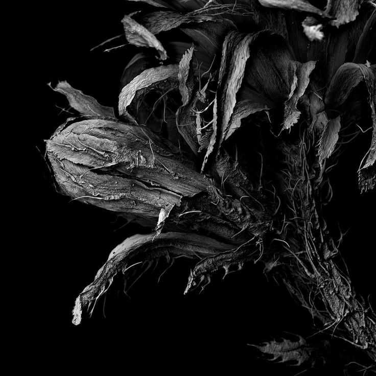 """Matsuura Tomoya, WITHERED PLANT """"Unknown"""" — larghezza dell'immagine 2,4 mm"""