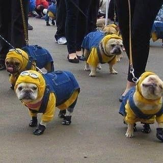 minion puppies! Think I just discovered Gerti's halloween costume!!!