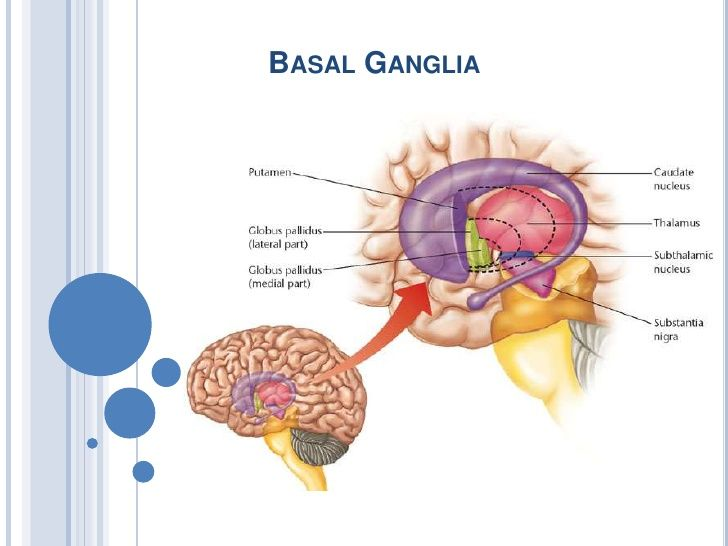 Basal ganglia 2010