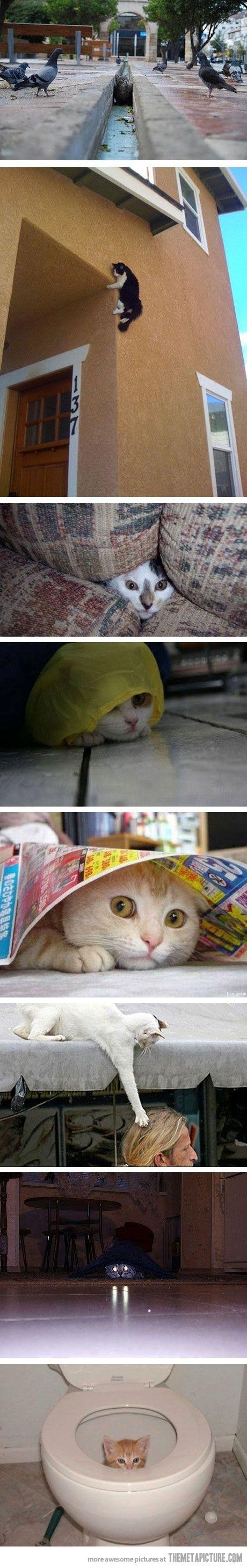 Jog on, kitties.