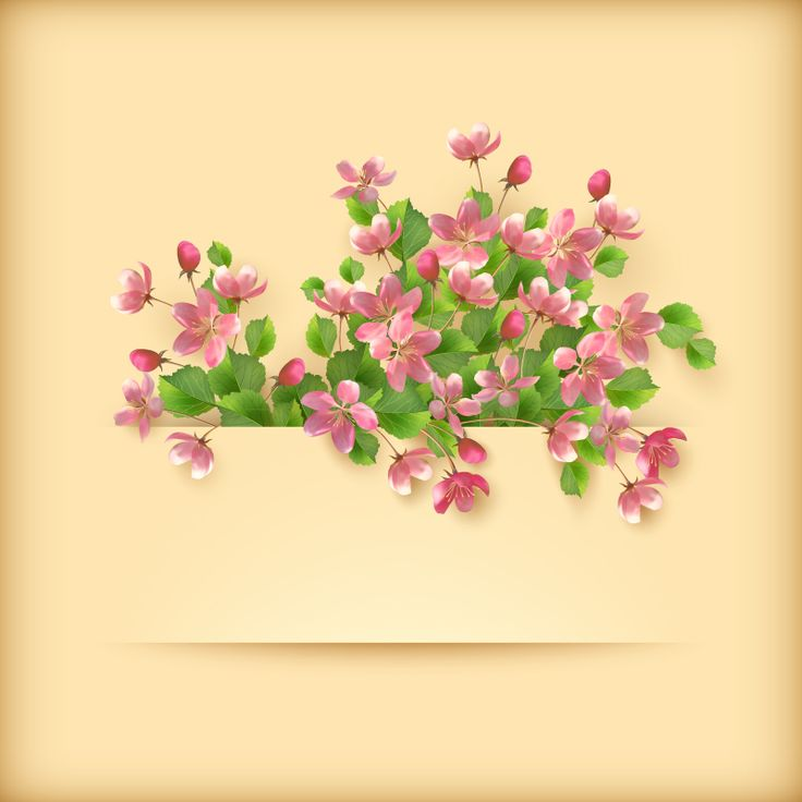 Exquisite apricot flower background vector