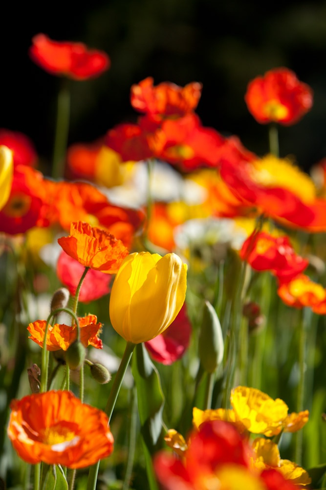 Alive with colour. Taken at Toowoomba Carnival of Flowers.