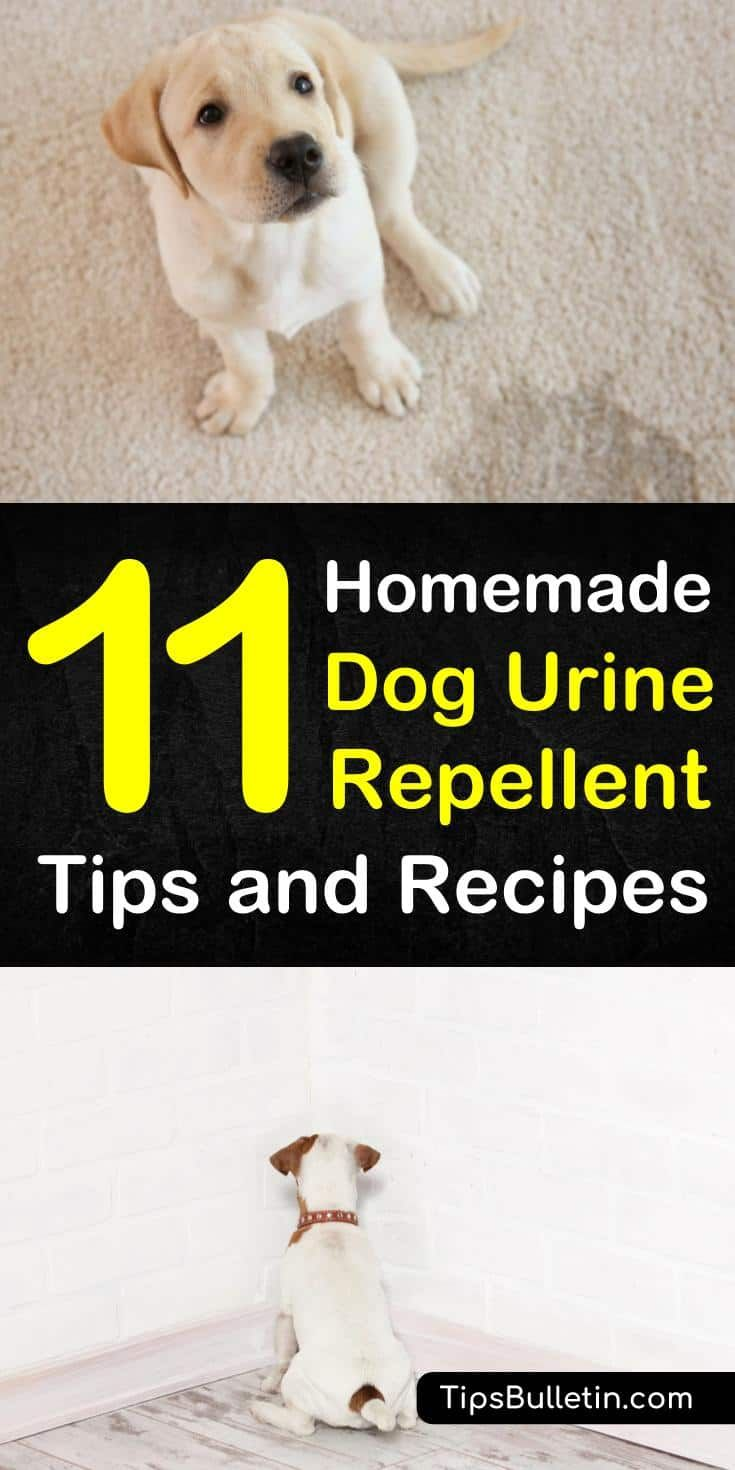 Keeping Dogs Away 11 Homemade Dog Urine Repellent Tips And