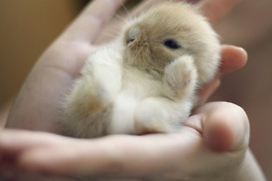 I have a bunny like that but its white its so adorable.She always likes to clean himself.Her name is Snowball.