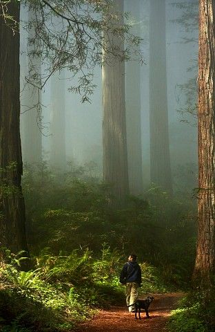 A perfect day, a walk in the forest of amazing Redwoods ...